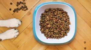 Cum să-ți determini câinele să mănânce hrană uscată